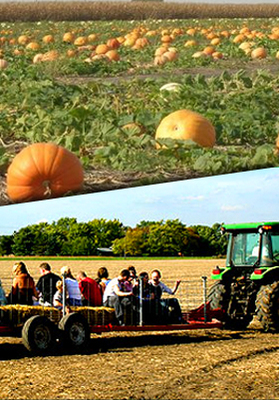 Heap's Giant Pumpkin Farm